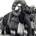 the-elephant-in-the-bantha-costume-photo-u1