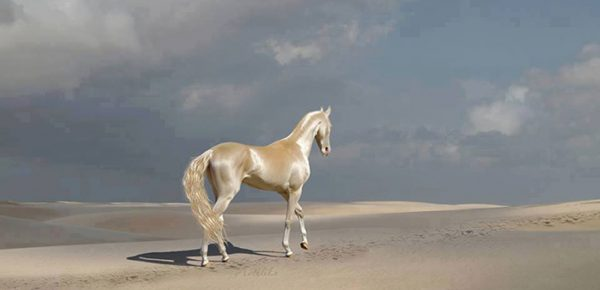 6poes-gold-horse-super-model-1