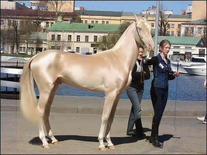 most beautiful horse in the world